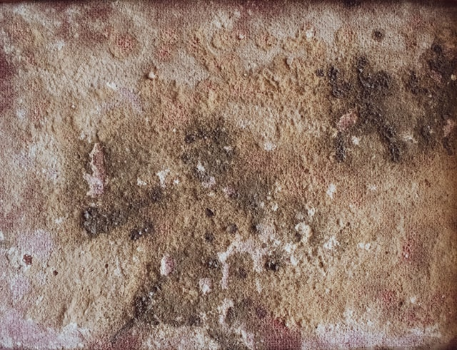 4 Reasons Why Calling Mold Remediation Services Loveland Colorado is Better Than DIY Methods