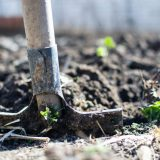 Capitalising on the Garden's New Popularity