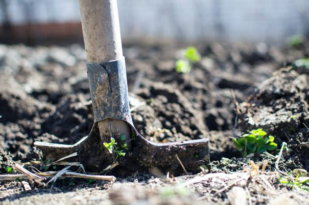 Capitalising on the Garden's New Popularity