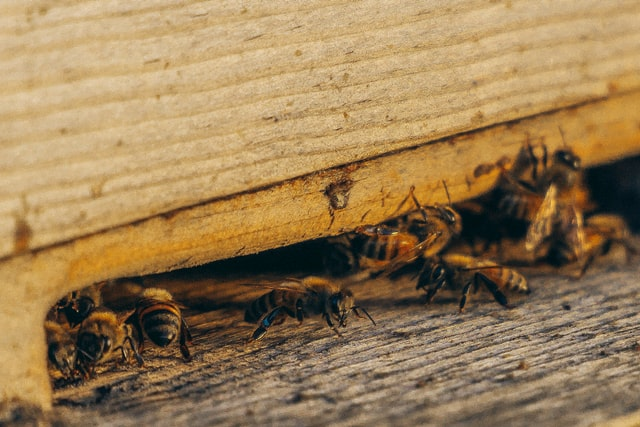 Why Pest Control Maintenance Plans Are the Best Choice for Temecula Homeowners