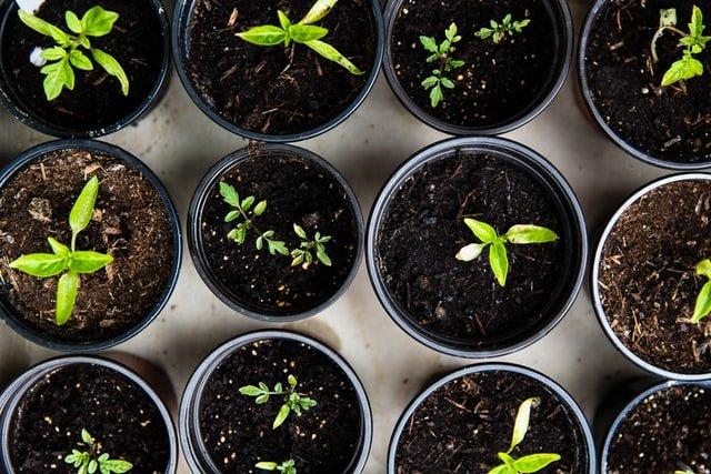Key Gardening Trends from 2020